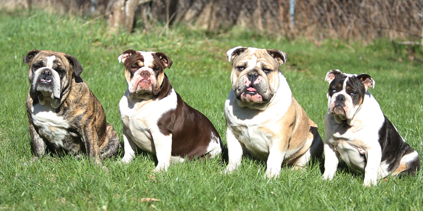 Spruce Hollow Bullies - The Maritimes Only Rare Colour